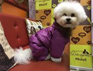Москва: Балути - салон для домашних животных Объявления в Москве » Услуги » Услуги для животных  Балути - салон для домашних животных ТОП ВИП Во Все Города Во