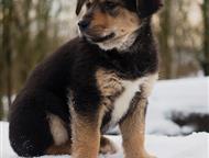 Санкт-Петербург: Собака в хорошие руки СПб. Приют Островок надежды     Я очень хочу домой   Сеня ищет дом!     Совсем малыш ещё . Любит молочко и творожок. Любит сид