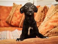 Санкт-Петербург: Собака в хорошие руки СПб. Приют Островок надежды     Я очень хочу домой     ПРима очень маленькая и хрупкая щенуля. Вырастет 40см . Вес 4кг Очень х